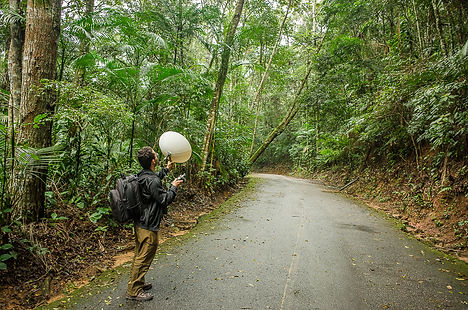 floresta-da-tijuca-0237.jpg