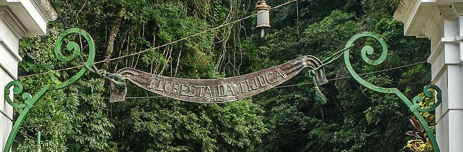 floresta-da-tijuca-0220-3.jpg