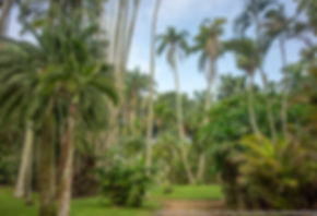 jardim-botanico-rio4.jpg