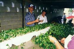 Cursos 1999 - Sao G da Palha - M2 - 16