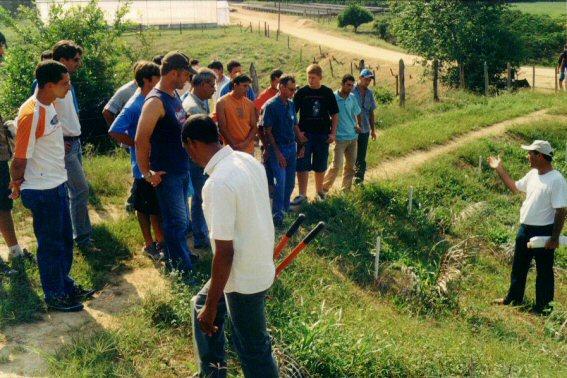 curso pratico 2005 cachoeiro fruteiras 11 vtecnica