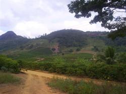 riobananal (7)