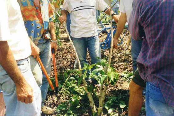 Santo Hilario(Linhares) 2003 M2-03