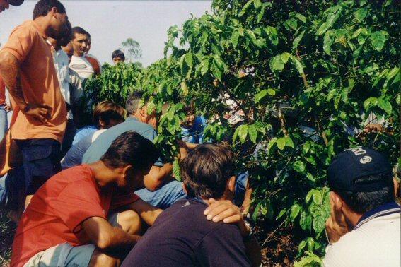 curso pratico 2005 cachoeiro fruteiras 15 vtecnica