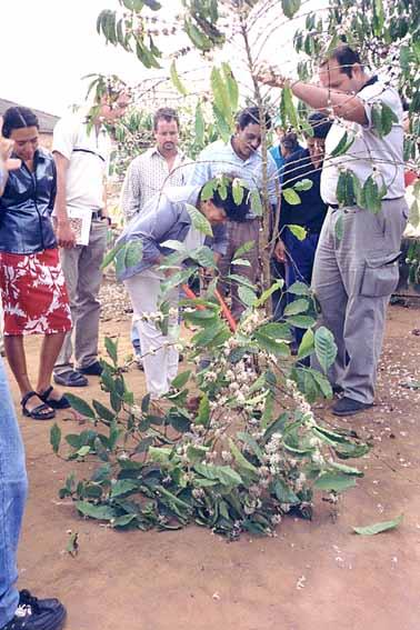 Cursos Alto Rio Novo M2 Foto 03