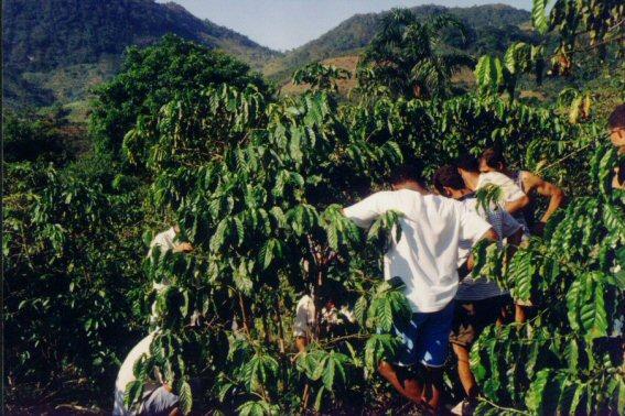 consultoria tec 2005 palmeiras mimoso su