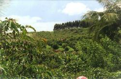 curso pratico 2006 rio bananal apratic 1