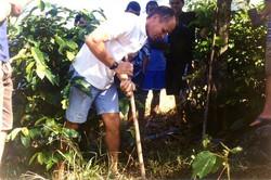 curso pratico 2004  palmeiras mimoso sul