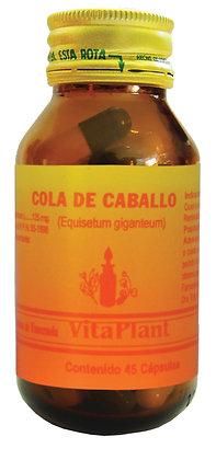 Cola de Caballo (Equisetum giganteum) cápsulas