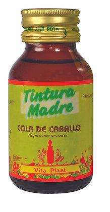 Cola de Caballo (Equisetum giganteum) tintura