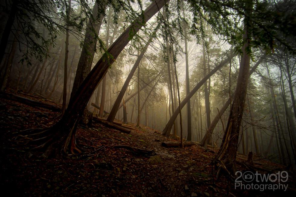 Misty Morning - Spencer Gorge