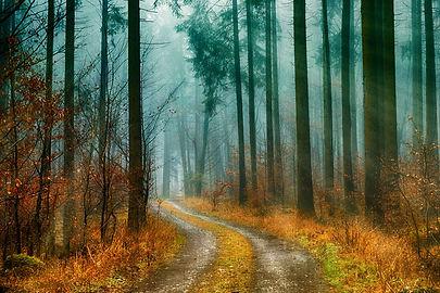 wood-3119829_1920.jpg