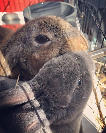 Bunny Love 🐰.jpg