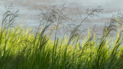 Layers of grass-