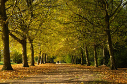 Avenue of trees, Stowe