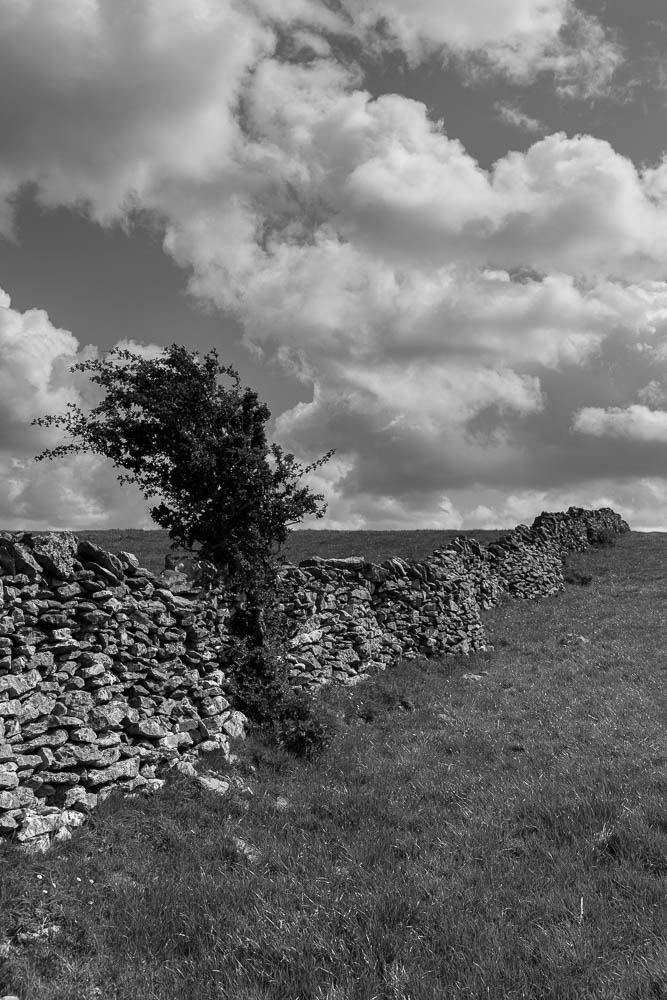 Wall, lone tree, b&w