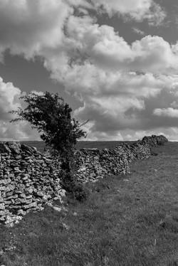 Wall, lone tree, b&w