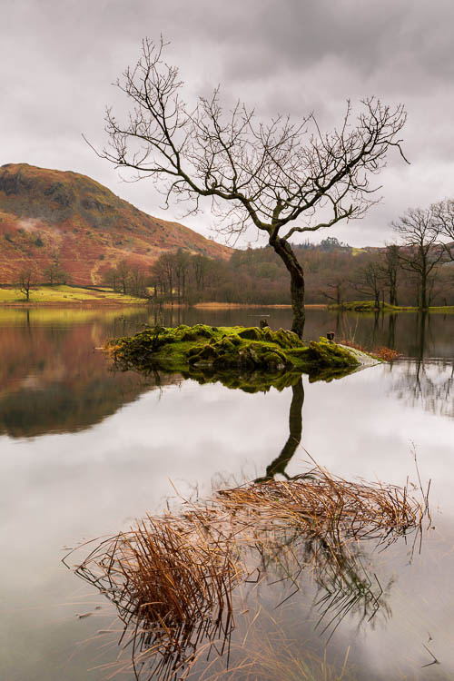Rydal Water, lone tree