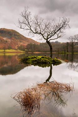 Rydal Water, lone tree