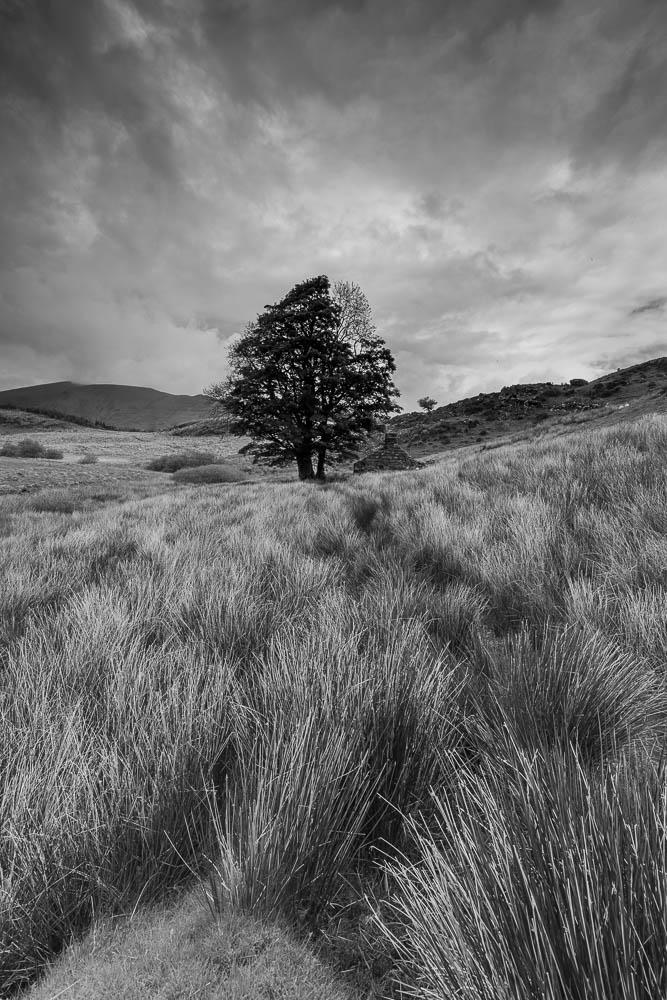 Lone tree, Llyn Y Dywarchen