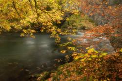 Clappersgate Bridge, autumn colours (1 o