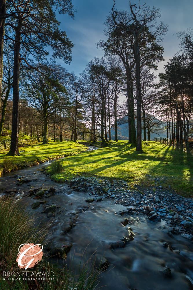 Buttermere trees & stream-8765