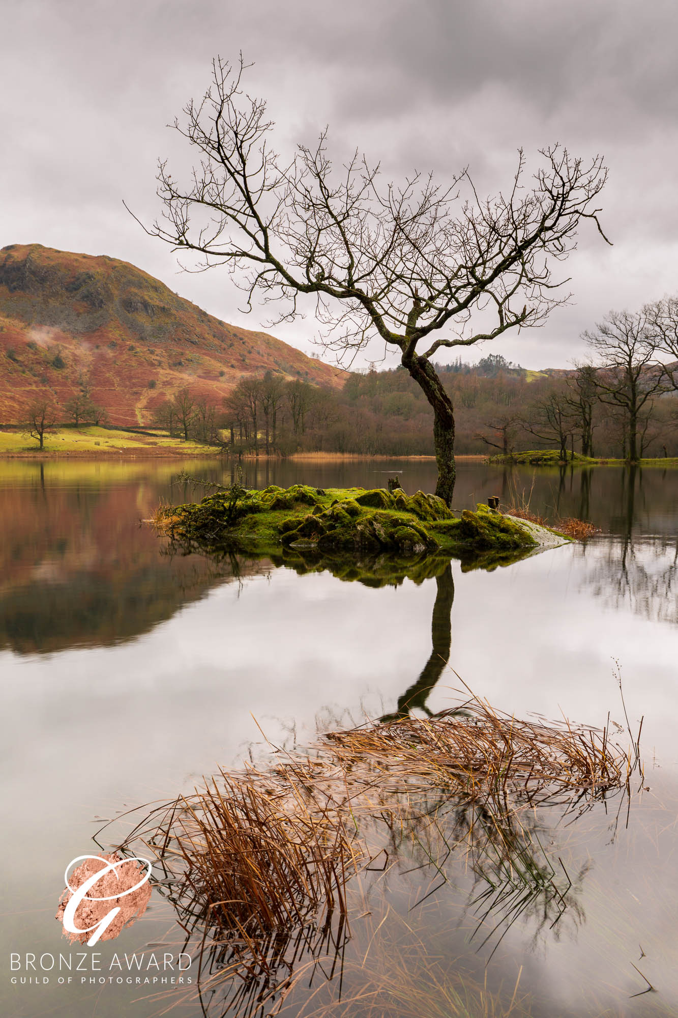 Lone tree, reflection, Rydal Water, Lake