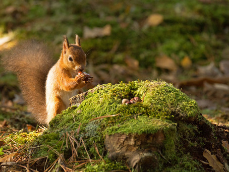 Brownsea Island - a beautiful day with Red Squirrels.