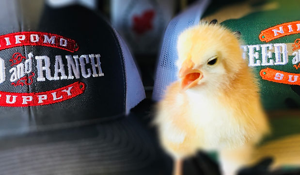 chicks-slideshow.jpg