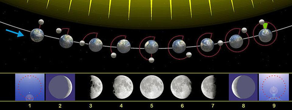 800px-Moon_phases_00.jpg