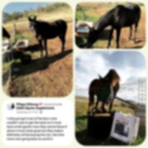 Fillapa Galloway - photo feedback April
