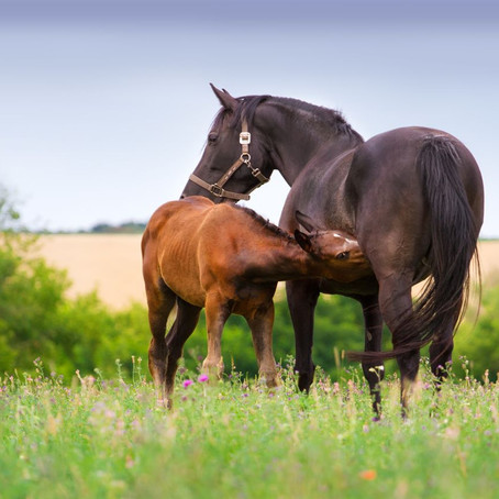 Preparation of Broodmares for Breeding Season - Part 1: Physiology