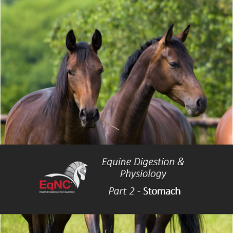Online Equine Digestion and Physiology - Part 2: The Stomach