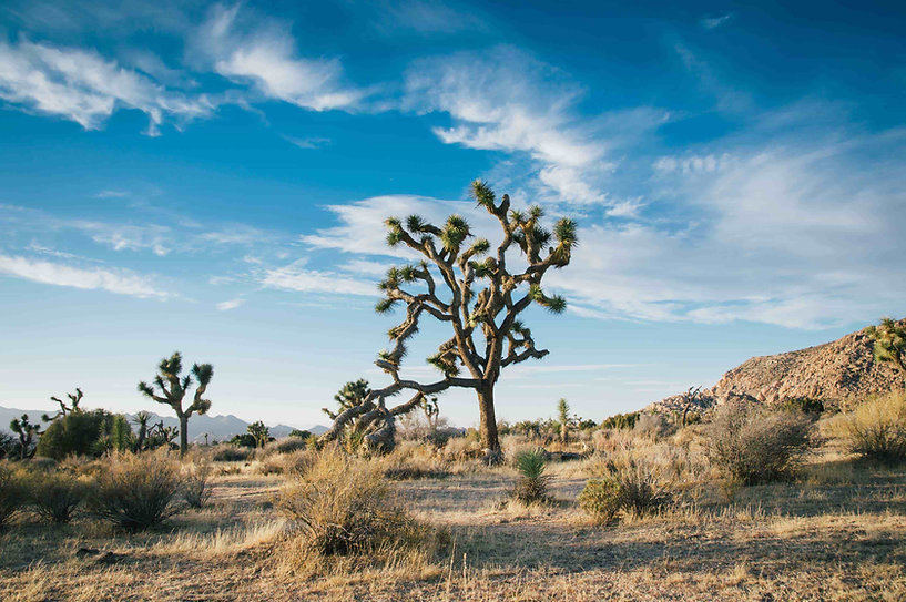 beautiful-landscape-shot-desert-trees-dr