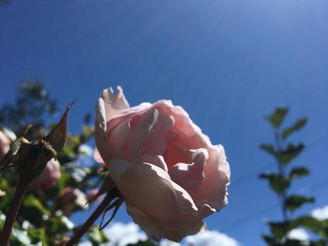 Plant Spirit Allies: Healing Trauma with Coregulation
