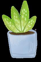 CPL_succulent.png