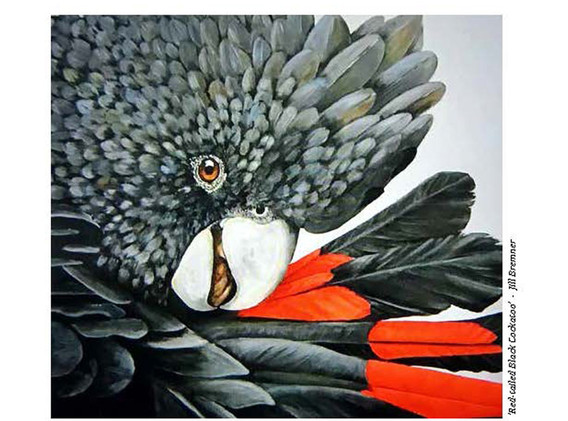 04 - Red-tailed Black Cockatoo