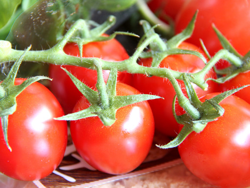 FOOD WRITING: The Journey of the Tomato
