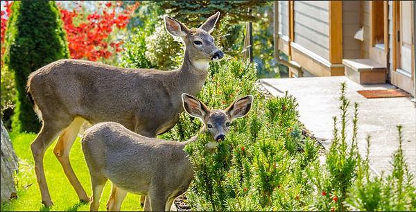 deer-proof-garden.jpg