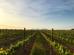 Tast de vins i arròs de Pals entre vinyes