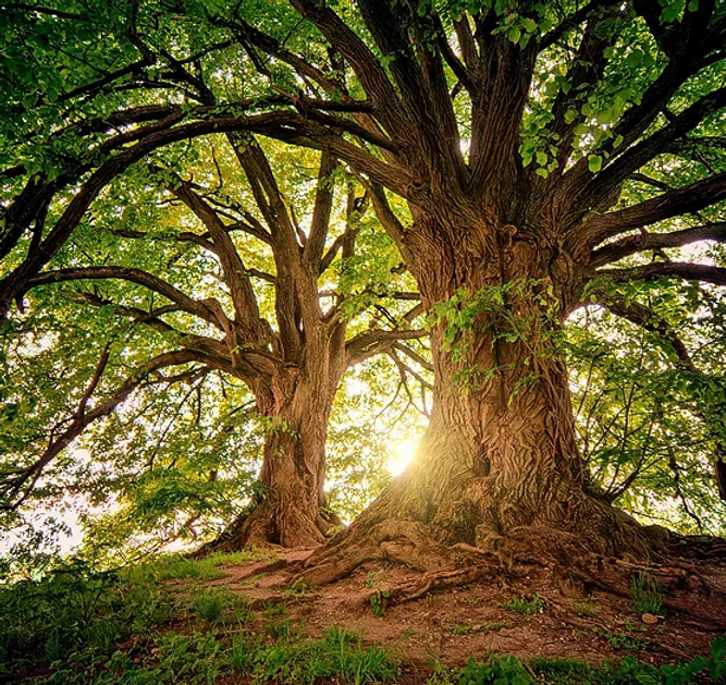 tree-3822149.webp