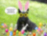 easter-bunny13.jpg