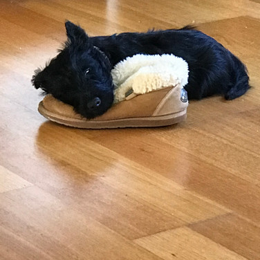 No I didn't steal the slipper