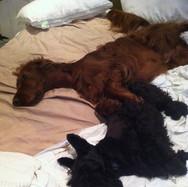 Belle & Barney in bed together