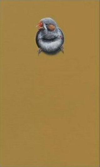 Huisnr. 16 Zebravink