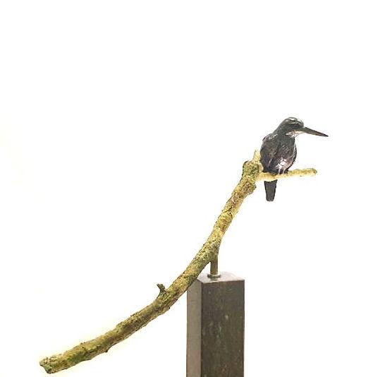 IJsvogel op tak II
