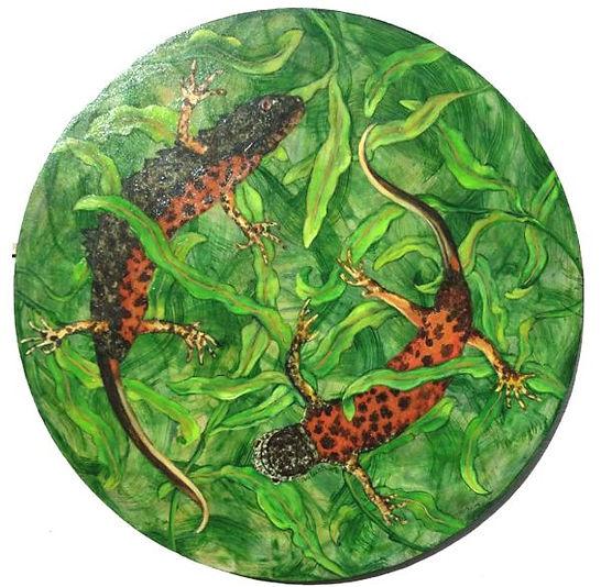 Kam salamanders