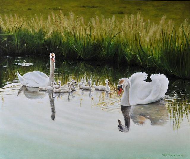 Swan family in backlight