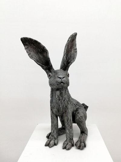 Hare (grey)