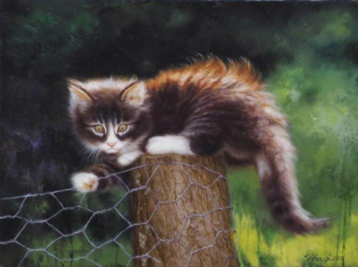 Poes op hek